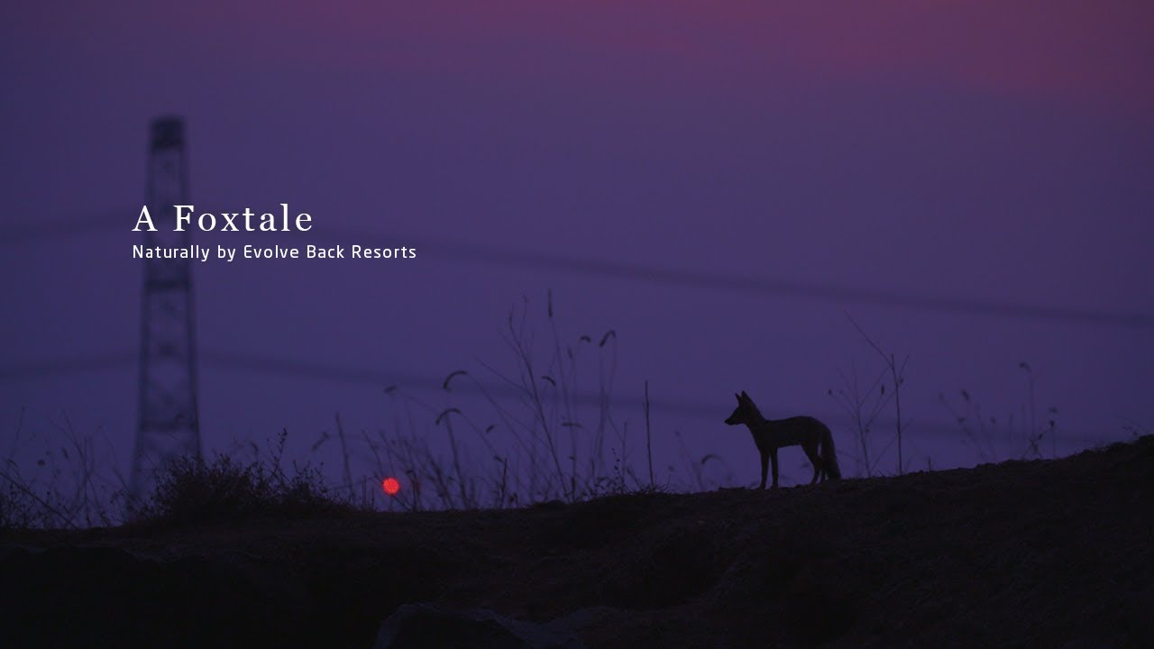 A Foxtale - Naturally by Evolve Back Resorts