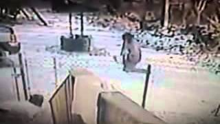 patea a gatito y el felino se defiende la ataca y hace huir a su perro