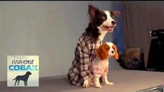 """Собаки из фильма """"Ёлки лохматые"""". Планета собак 🌏 Моя Планета"""