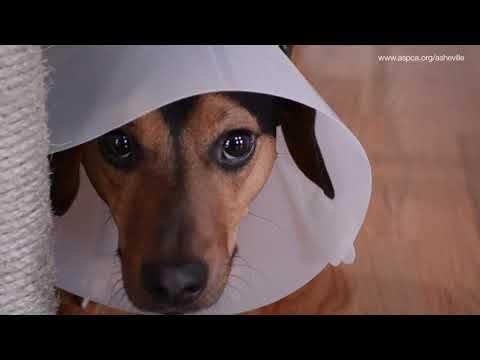 ASPCA Spay/Neuter Alliance: After Surgery