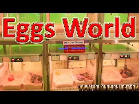 Safari World with Marine Park Ticket Price See Eggs World Bangkok Thailand