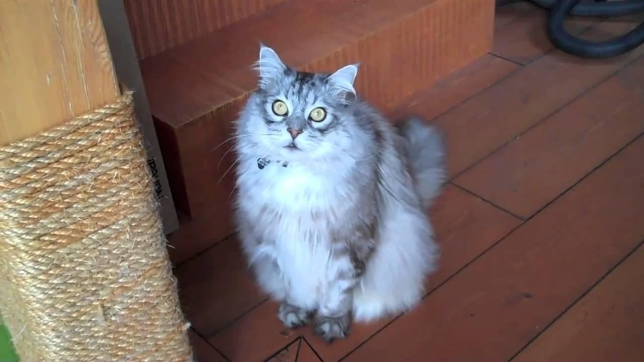 Amazing Cat House Youtube