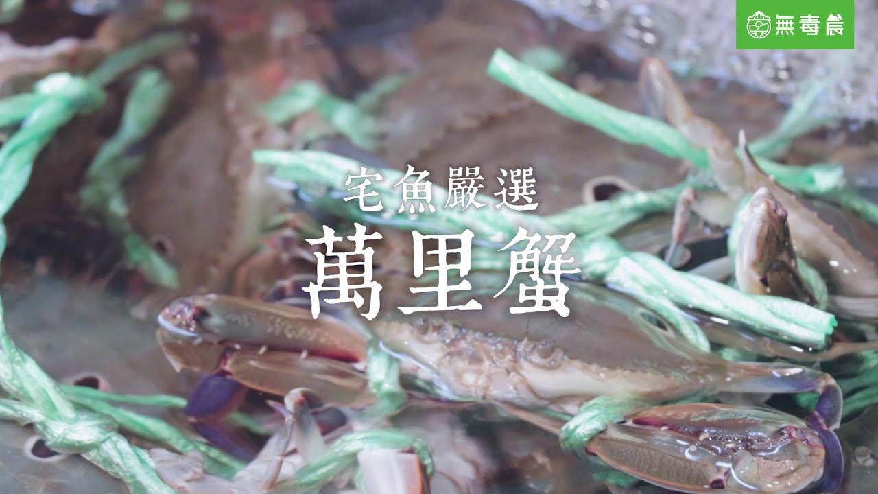 無毒農產地直擊|宅魚嚴選萬里蟹
