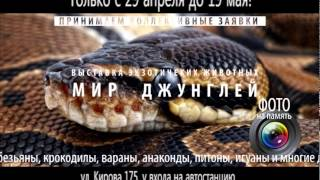 В Хасавюрте открыта выставка экзотических животных
