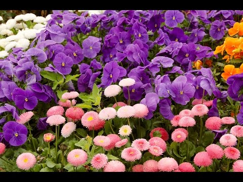 Tên các loài hoa P3
