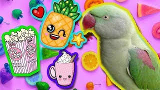 Александрийский попугай ест КОКОС