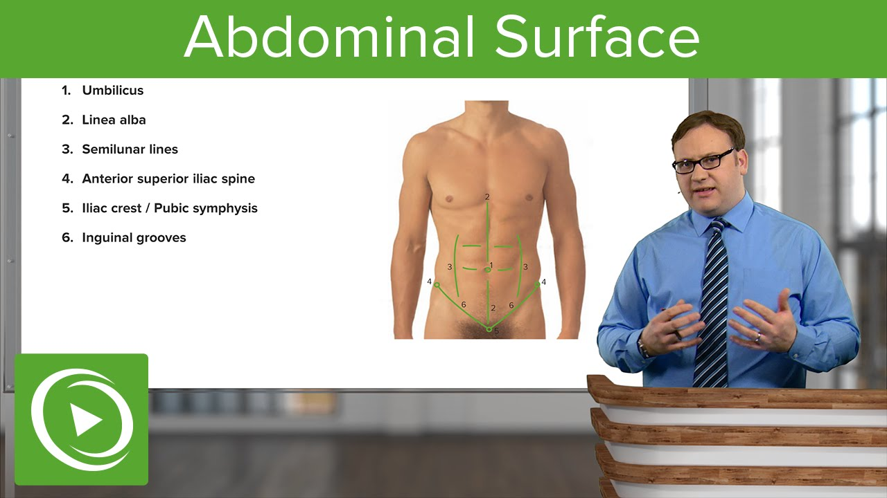 Abdominal Surface – Anatomy | Lecturio