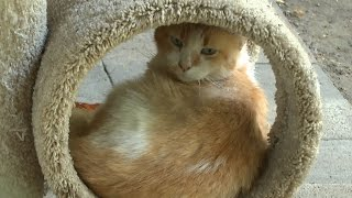 Feline Fun - Our special visit to the Cat House on the Kings