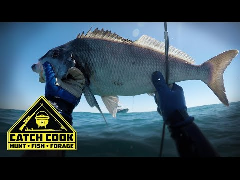 Spearfishing Catch Cook with awesome underwater footage at Struisbaai tip of Africa