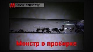 Монстр в пробирке ● Messor structor