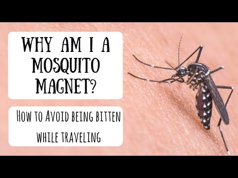 Dealing with Mosquito Bites | 10 Tips to Protect Yourself While Traveling