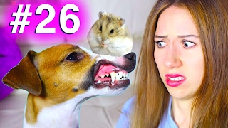 НОВЫЕ ПРАВИЛА СОБАКА vs ХОМЯК КОНКУРС #26 | Elli Di Pets