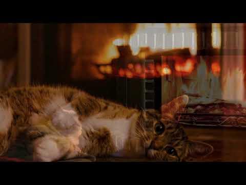 Мурлыканье кошки под звуки огня в камине 5-ть с половиной часов