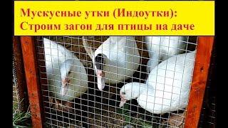 Мускусные утки (индоутки): Строим загон для птицы на даче