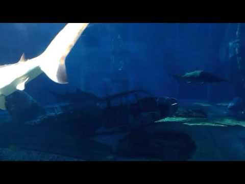 Durban uShaka Sea World - Shark Aquarium