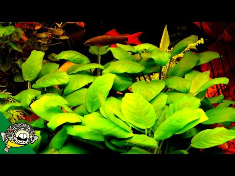 Cycling a Planted Aquarium Biological Filter