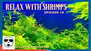 Relax With Shrimp Music Episode 14