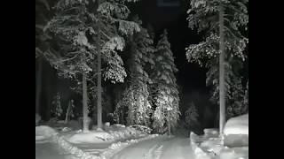 видео Чудесная жизнь леса зимой