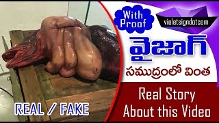 Mermaid in vizag // real or fake...with proof - hd