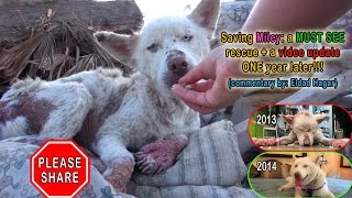 NEW VIDEO: Saving Miley: a MUST SEE rescue + a video update ONE year later!!!  Please share.