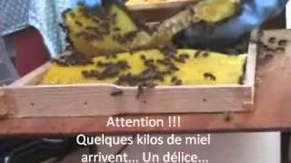 Récupération d'un essaim d'abeilles par Daniel BERGERON-Youtube (2)