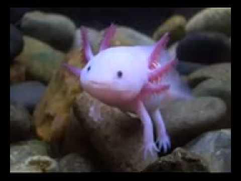 Weird Fish Thing 4