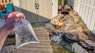 BUYING small FISH for My *NEW* POND!!!