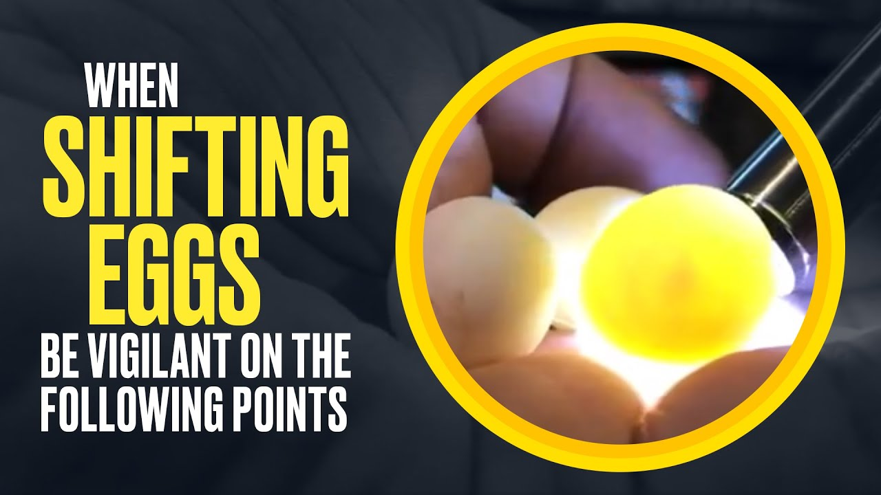 When Shifting Eggs 🥚, Be Vigilant On The Following Points