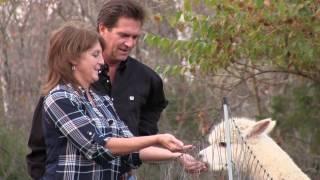 Feeding Milton the Alpaca