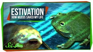 Estivation: How Mucus Saved My Life
