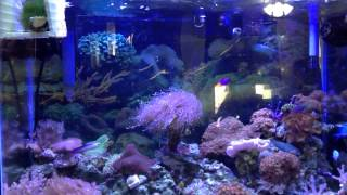 75 Gallon Marineland Reef Tank Build Part 2 - Equipment Overview