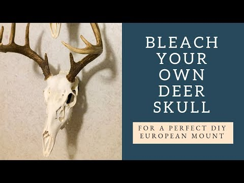 Bleach Your Own Deer Skull for a Perfect European Mount