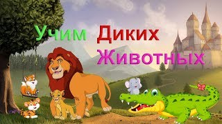 ДИКИЕ ЖИВОТНЫЕ для малышей!  Учим животных для самых маленьких! Развивающий мультфильм для детей!