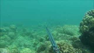 Spearfishing Hilo Hawaii (Da Addiction)