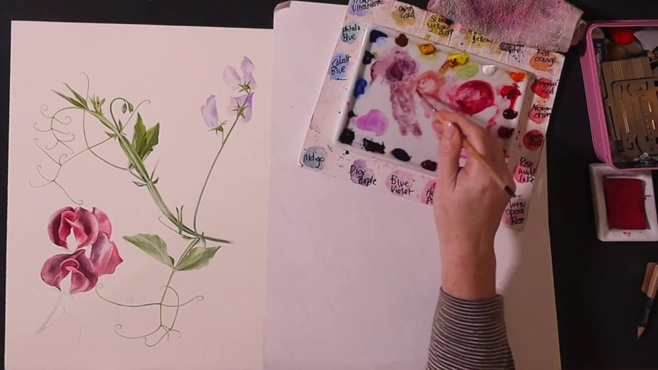 Billy showell how to paint a sweet pea previewwatercolour billy showell how to paint a sweet pea previewwatercolour beautiful botanical painting dhlflorist Image collections