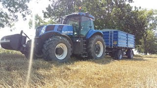 Żniwa pszenicy 2018 New Holland CX6080/T8.390/TM175/TD100