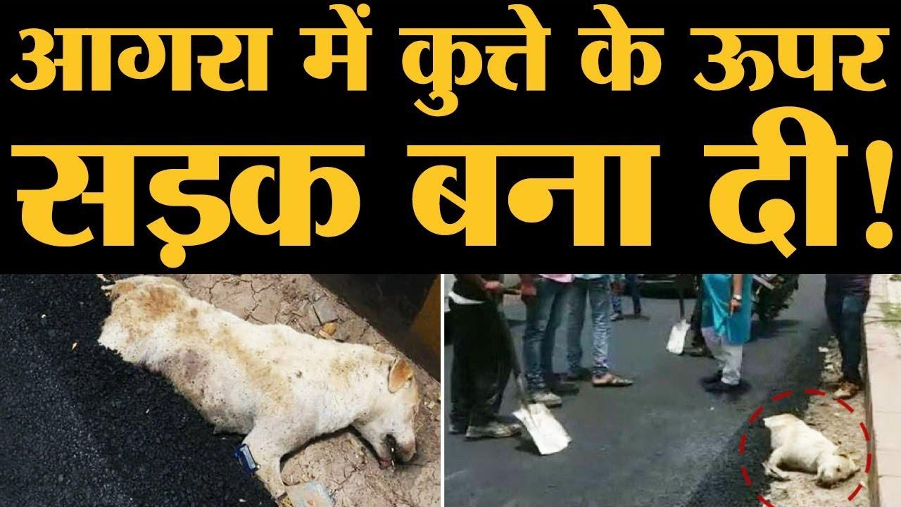 कुत्ते के ऊपर सड़क बनने के बाद Uttar Pradesh Police ने और गड़बड़ कर दी | The Lallantop