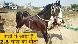 Horse Mandi Dadri Ballia UP