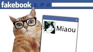 Les chats sur Facebook (Giggles)