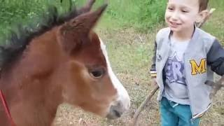Прогулка с сыном. Встретили лошадей и сумасшедшего ослика)