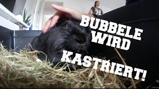 BUBBELE WIRD KASTRIERT! | AnKat