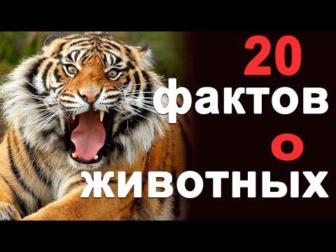 Интересные факты о кошках / Бабушка Шошо