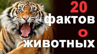 видео Интересные факты о животных
