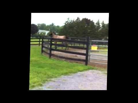 Forecon at Mill Creek Farm