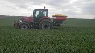 Buğday Gübreleme zamanları ve teknikleri