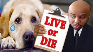 LIVE OR DIE?   Animal Inspector
