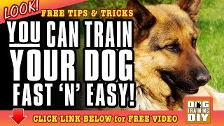 Dog Training Sacramento | Free Dog Training Tips | Dog Obedience Training Sacramento, Ca