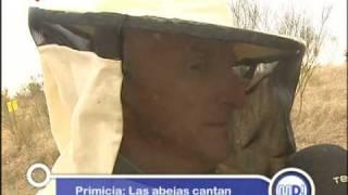 Presentación en Telemadrid del CD El Beso de la Abeja - The Kiss of the Bee