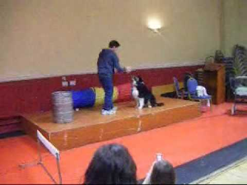 Dog Preforming At Talent Show