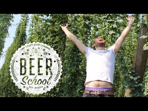 Beer School: What Are Hops? | The Craft Beer Channel